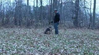 Schutzhund Dog Training Minneapolis.wmv