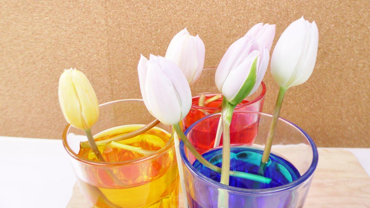 Blumen selber frben  Tulpen frben mit Lebensmittelfarbe