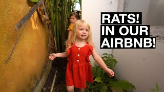 Gambar cover RATS INFEST our Airbnb! (Ubud, Bali)