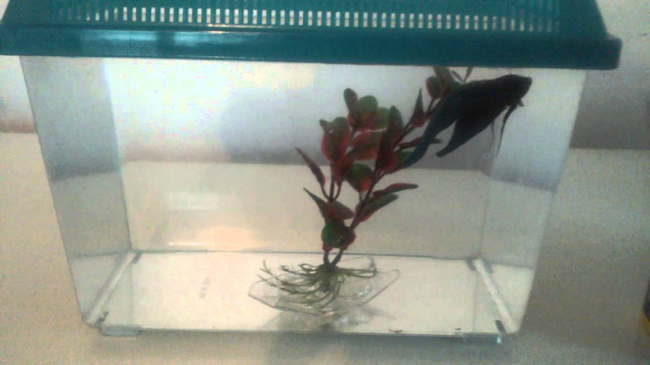 Walmart betta fish one gallon tank please read for Betta fish tanks walmart