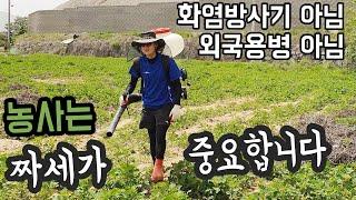 30대 여자혼자 귀농,폼나게 고구마 농사 시작- 쨍이 …