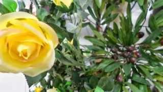 Декоративные растения купить декоративные для интерьера квартиры ландшафта сада дачи дома(, 2015-04-29T16:33:56.000Z)