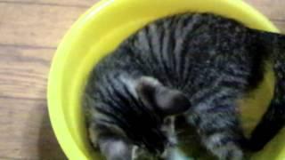 ケロリン桶と仔猫
