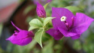 Conheça Algumas Plantas Com Ciclo De Vida Longo