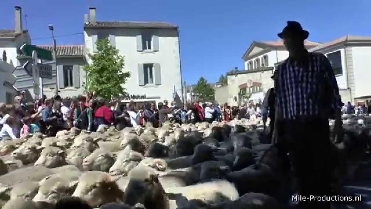 Transhumance schapendag st r my de provence france - Chambre des notaires des bouches du rhone ...