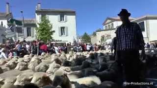 Transhumance (Schapendag), St.-Rémy-de-Provence (France/Bouches-du-Rhône)