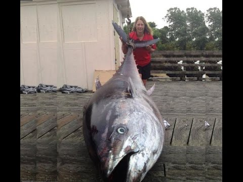 World's Biggest Record Fish Ever Caught With Rod And Line