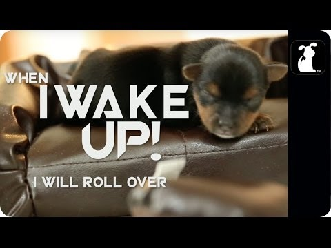 Avicii - Wake Me Up (Puppy Version)