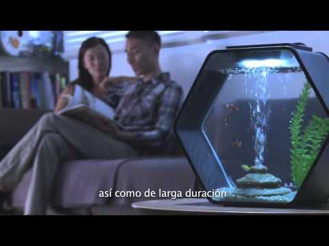 Deco O & Deco Hexo by AA Aquarium (Spanish Subtitle)