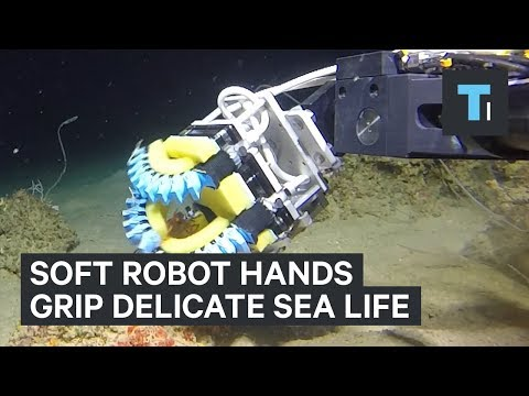 Thumbnail: These Harvard-designed underwater robots have advanced, squishy hands to grip delicate sea life