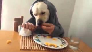 Собака в виде человека