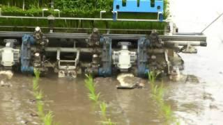 Rice-transplanting at japanese farm