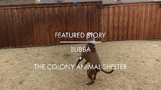 Local Love: Bubba + The Colony Animal Shelter