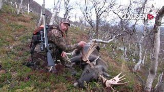 Fjelljakt på elg med Niklas Blindh, filmene ligger på ClausenTV.