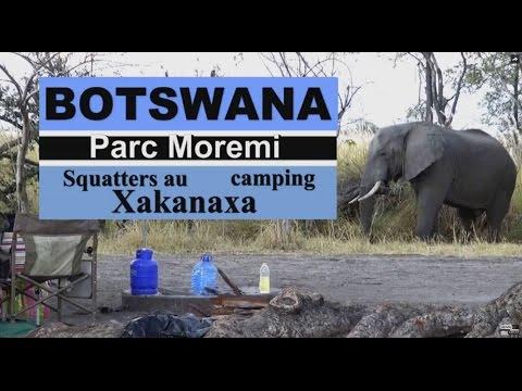 Eléphants Squatters au Camping Xakanaxa BOTSWANA art.lyb