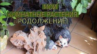 ОБЗОР ЦВЕТОВ В АВГУСТЕ ПРОДОЛЖАЕТСЯ!