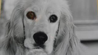 a special tribute to my loving dog goodbye my friend