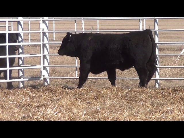 Express Ranches Lot 89