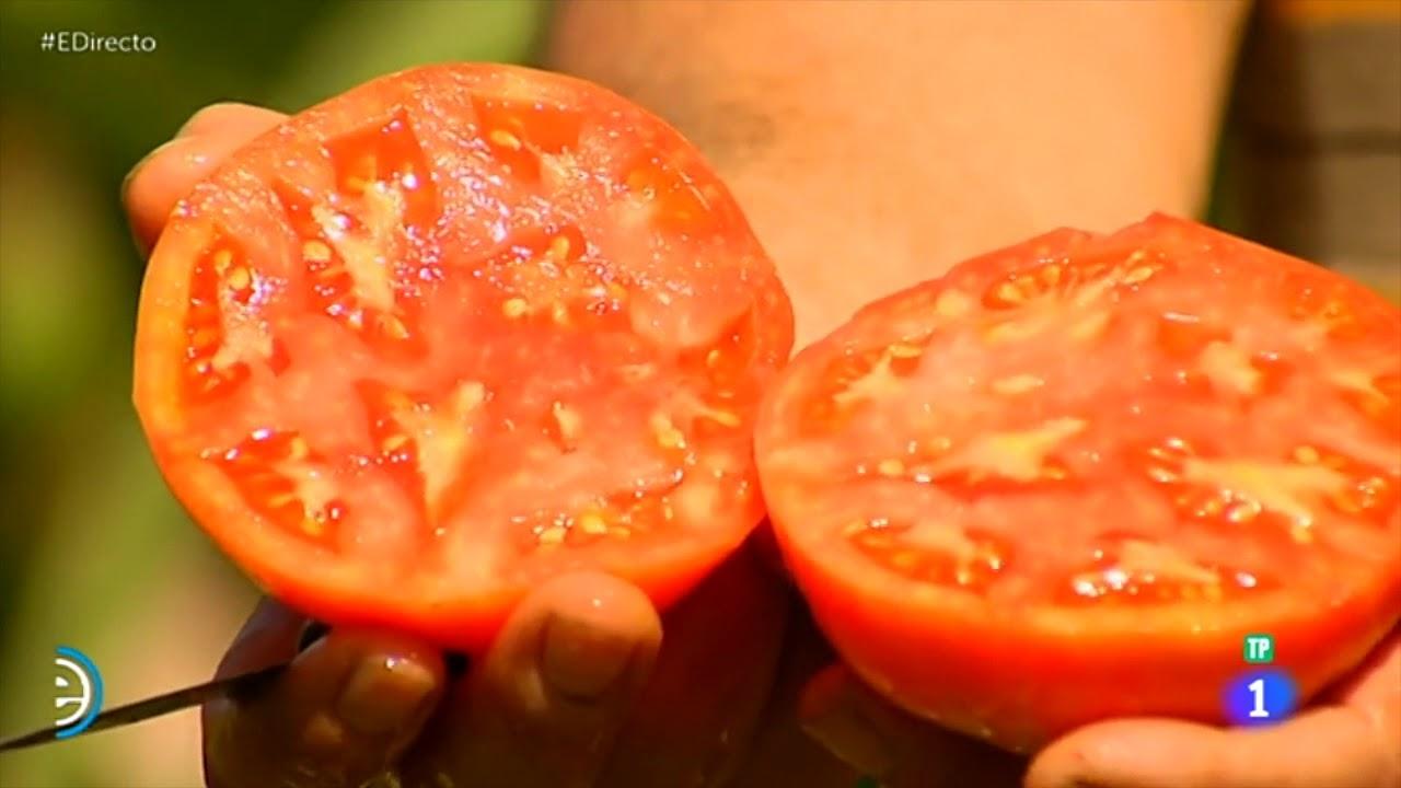 La costa del tomate - España directo (TVE) - 31/08/18