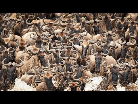 Tanzania Travel Video 2016 With DJI Osmo And Canon 5D Mark III