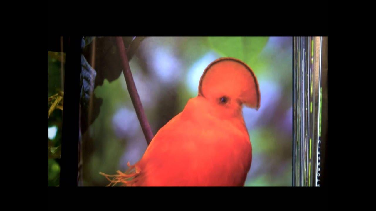 letras frescas  libro  u0026quot las aves m u00e1s hermosas de colombia