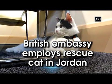 British embassy employs rescue cat in Jordan