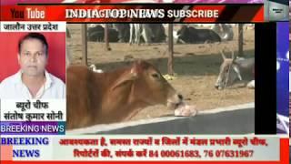 अन्ना पशुओं का आतंक।। india top news