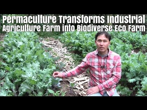 Permaculture Transforms Industrial Agriculture Farm into Biodiverse Eco Farm
