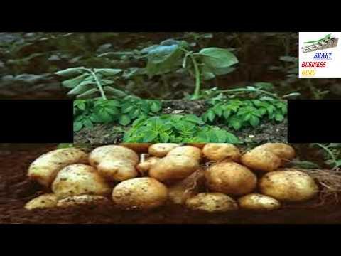 नयातरीका से आलू की खेती कर अच्छा लाभ कमाया जा सकता है।