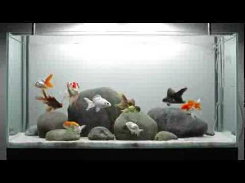 Ещё один персноводный аквариум в минимализме
