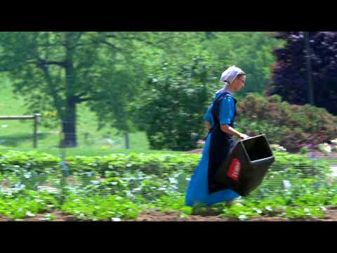 Amish Lancaster- Pennsylvania