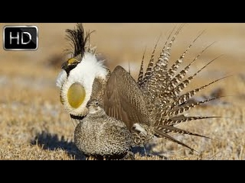 Wild North America - National Geographic Documentary