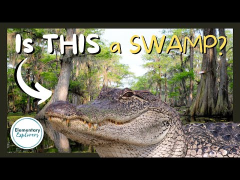 What's the Difference Between a Swamp and a Bayou? - Swamp Tour - Lafayette, Louisiana