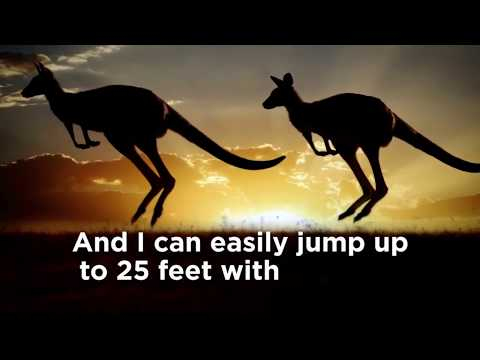 Animal Jam - Modern Major Kangaroo