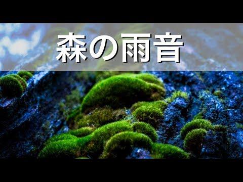 【癒しの 自然音】「森の雨音」1時間!リラックス環境音 作業用BGM 睡眠用BGM ▶1:00:01