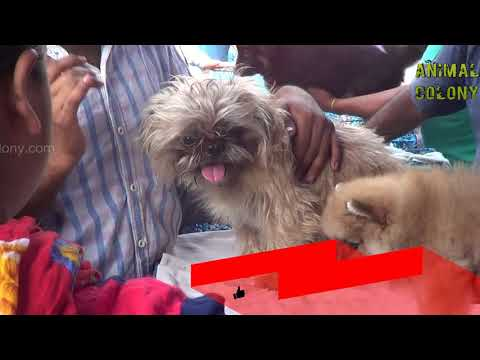gallif street lasa dog, pomerian and many more with price || animal colony || galiff street