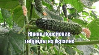 Агроцентр СИЧ