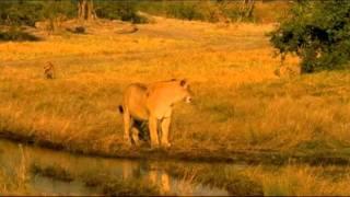 The Last Lions  - 2011 trailer