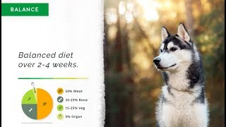 A Quick and Easy Raw and Cooked Natural Diet Course for Dogs (Part 1 of 3)
