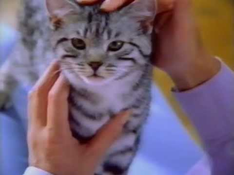 new-zealand-tv:-whiskas-advertisement