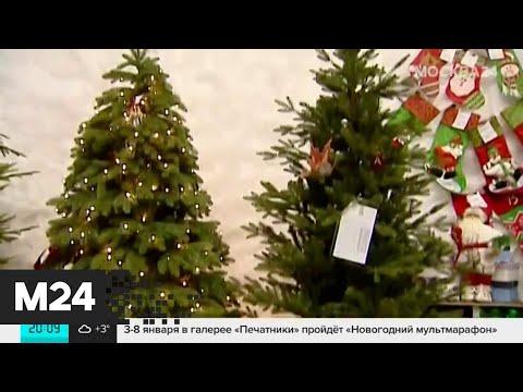 Какую елку лучше выбрать на Новый год? - Москва 24