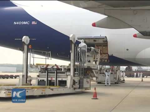 Second air cargo of live cattle from Australia arrive in China
