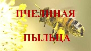 Пчелиная пыльца. Результат применения. Польза пчелиной пыльцы. Отзывы о пчелиной пыльце