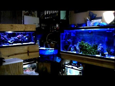 CheckItOut! New & Improved Saltwater #ReefRoom Live Streaming Aquariums in HD 05.25.2018