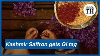 Kashmir Saffron gets GI tag