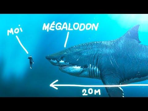 le-mÉgalodon-a-t-il-vraiment-existÉ-?-vrai-ou-faux-#93