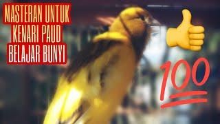 Kenari Bon Kuning Gacor Untuk Pancingan Paud Agar Cepat Bunyi Gacor Dan Ngerol