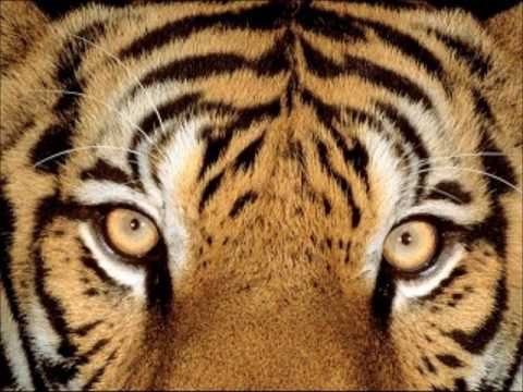 The Light of the Tiger - Self Knowledge - Stephen Wingate