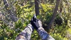 Bear Hunting with a 40 Cal Pistol (no kill)
