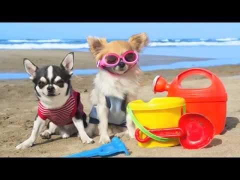 Love Summer. Love LateRooms.com.